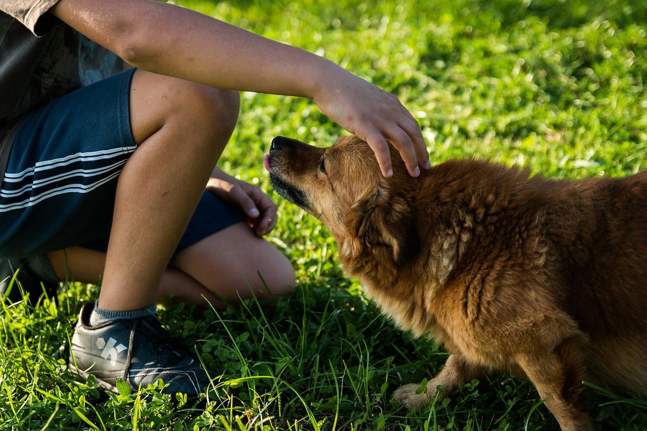 Boy petting dog properly trained to avoid dog bite injury