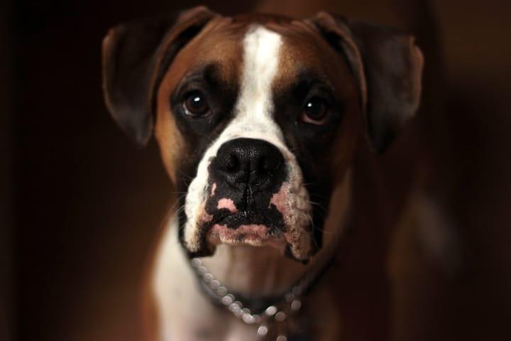 dog-that-bites