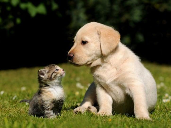 puppy kitten support animals
