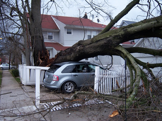 storm damage hurricane fallen tree home car